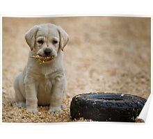 Born Retriever Poster