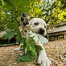 Loose Leaf by Bill Maynard