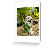Loose Leaf Greeting Card