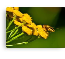 Seeking the Nectar Canvas Print