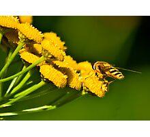 Seeking the Nectar Photographic Print