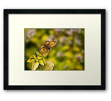 Gatekeeper Butterfly #2 Framed Print