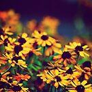 Spring Time by Kornrawiee