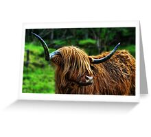 Highland Coo. Greeting Card
