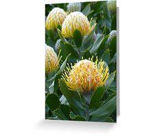 Yellow Waratah Flowers Greeting Card