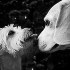 Anzac & Charlie by { wetnosefotos.com  }