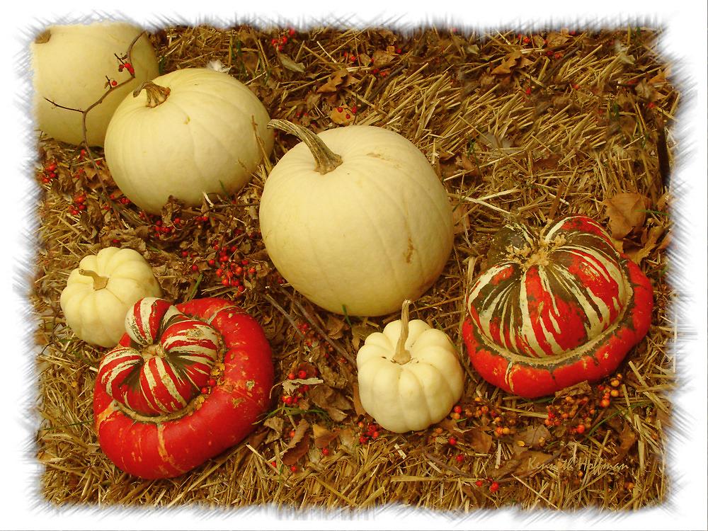 Pumpkins by Kenneth Hoffman