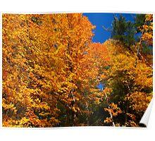 Autumn leaf feast Poster