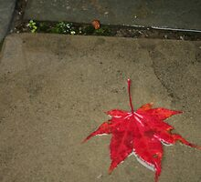 Red leaf in the rain by cindyh