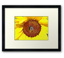 Sunflower Centre Framed Print