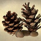 Acorns and fir cones by Martyn Franklin