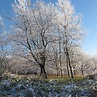 Winter Parkland No2 by StephenRB