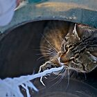 Wonderful child's plays . What's New Pussy Cat?  . by Brown Sugar . Views (919) Thx!. by © Andrzej Goszcz,M.D. Ph.D