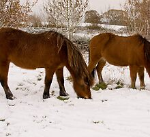 Icey's in snow. by Jennifer Bradford