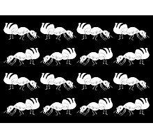 Cute Black and White Ant Pattern Photographic Print