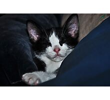 """ Catnip Nap "" Photographic Print"