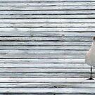 Solitary Seagull by Nicole I Hamilton