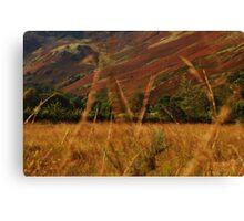 wind through the grass Canvas Print