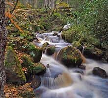 Autmn Flow by paula smith