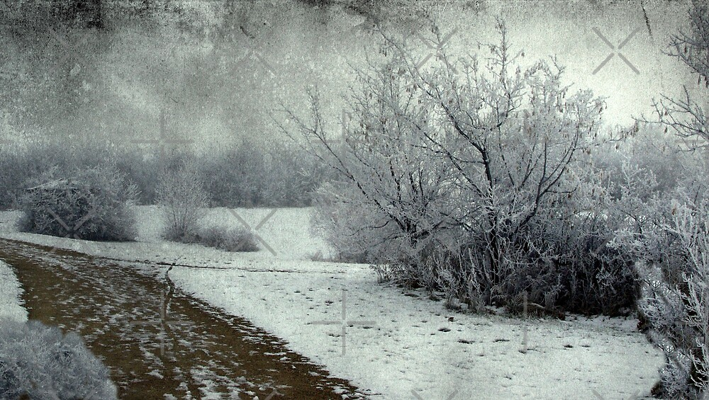 Winter Path by Josie Duff