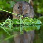 Ratty's Reflection by Val Saxby