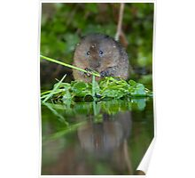 Ratty's Reflection Poster