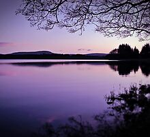 Lavender Light Over Lake Mentieth by Aj Finan