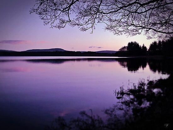 Lavender Light Over Lake Mentieth by Aj Finan