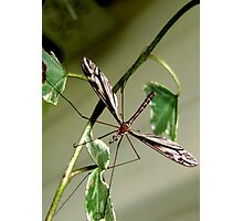Skinny Bug Photographic Print
