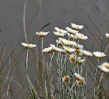 Bouquet of Flowers on the Glenelg River by Michael Barnett