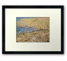Wind-Bent - Mobile Bay, AL Framed Print