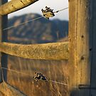 Good Fences  by John  Sperry