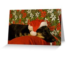 Indy - Waiting for Santa Greeting Card