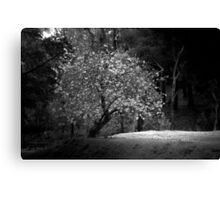 Lonely Tree - Melbourne Canvas Print