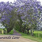 Jacaranda Lane by Heabar
