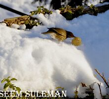 BIRD EATING by NASEEM SULEMAN