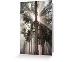 Natural Light - Dandenong Ranges, Victoria Greeting Card
