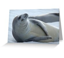 Cool Crabeater Seal Greeting Card