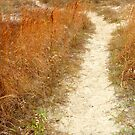 Path to Solitude by Tibby Steedly