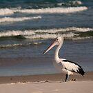 Beach Pelican by Jenny Dean