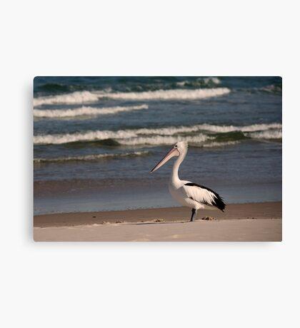Beach Pelican Canvas Print