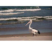Beach Pelican Photographic Print