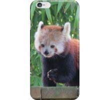 Red panda munchies iPhone Case/Skin