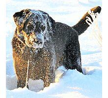 The abominable snowdog Photographic Print