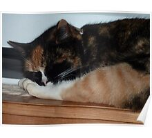 Who's leg is that? - Tortoise shell cat. Poster