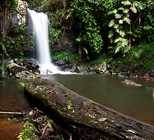 Curtis Falls - Mount Tamborine - Gold Coast - Queensland by Paul Davis