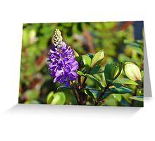 Last flower of summer Greeting Card