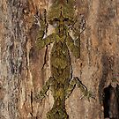 Southern Leaf Tailed Gecko by Steve Bullock