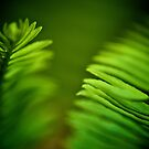 Delicate green leafs...Got 2 Featured Works by Kornrawiee