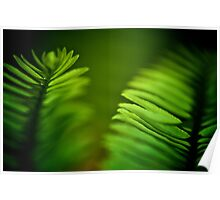 Delicate green leafs...Got 2 Featured Works Poster